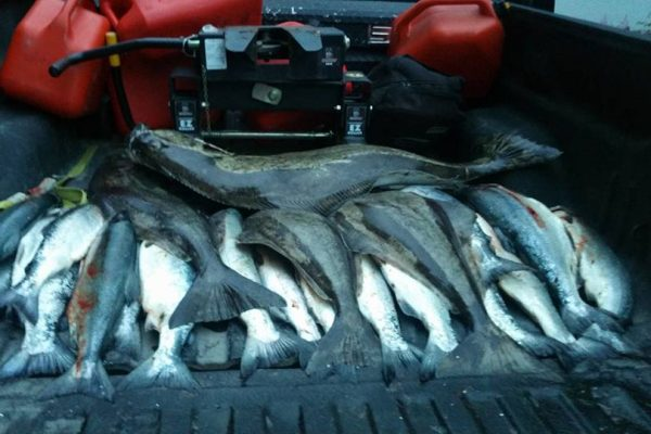Overnight charter haul of fish